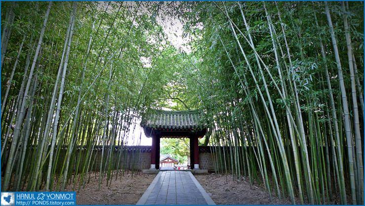 대나무숲 - Google 검색