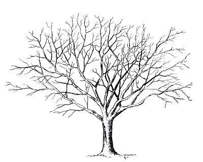 best tree clipart black and white 18982 clipartion com vbs rh pinterest ie cutting trees clipart black and white pine trees clipart black and white
