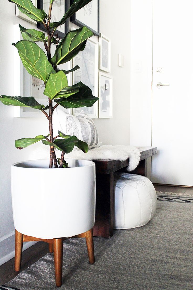 oversized potted snake plants for living room idea   Beautiful Decorating Plants Indoors Ideas - Amazing Home ...