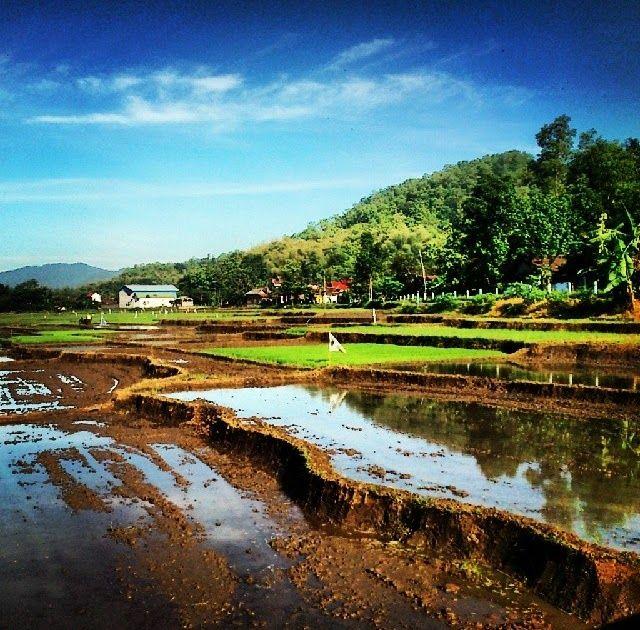 21 Pemandangan Nusantara Cantik Sawah Indonesia Gunung Padi Air Ladang Peman Download 5 Destinasi Teratas Di Indonesia Dengan Pem Di 2020 Pemandangan Lautan Hutan