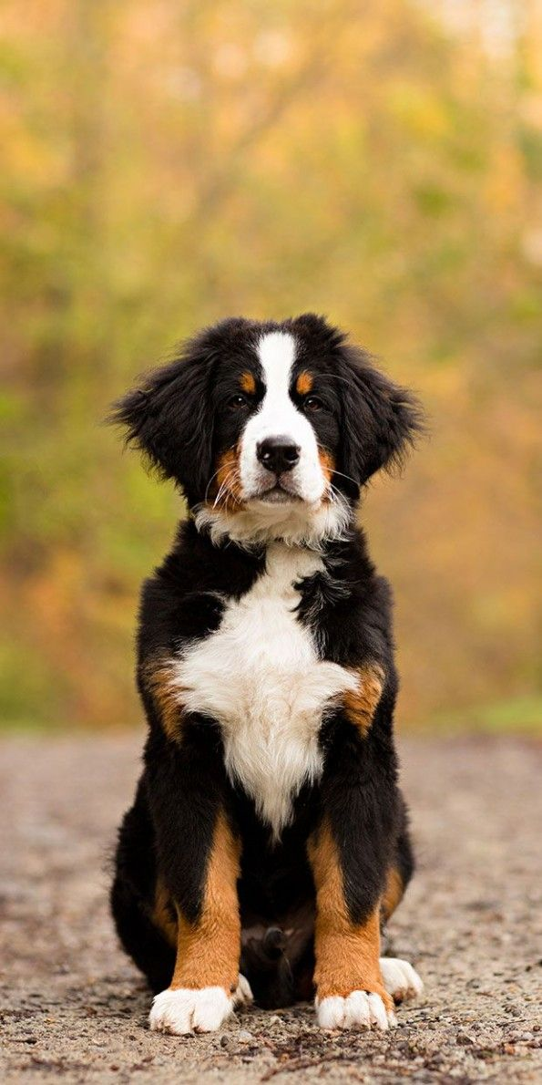 10 Best Dog Breeds For Toddlers Beautiful Dogs Dogs Dog Photos