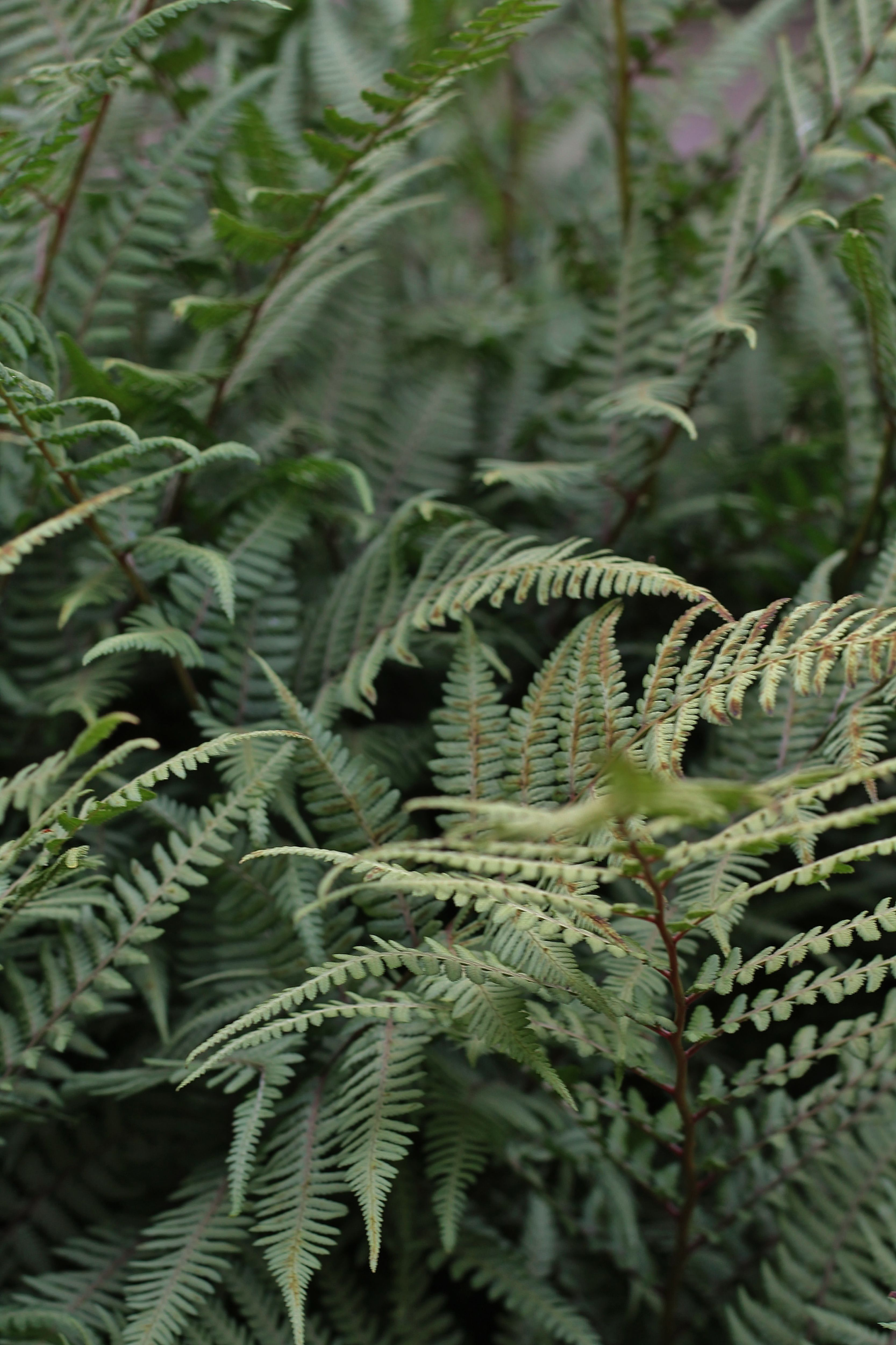 Fall Spring Fern Green Wallpaper Iphone Wallpapers In