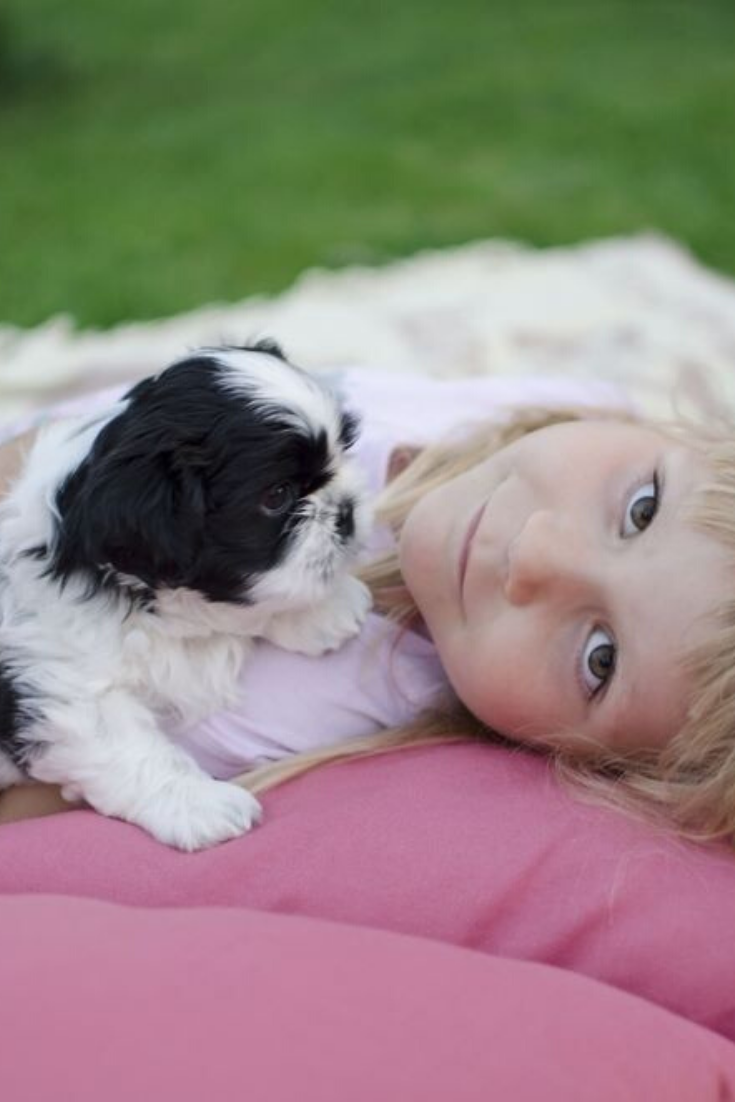 Blonde Girl Four Years Old Lying On The Pillows With Black And White Shih Tzu Puppy Shihtzu In 2020