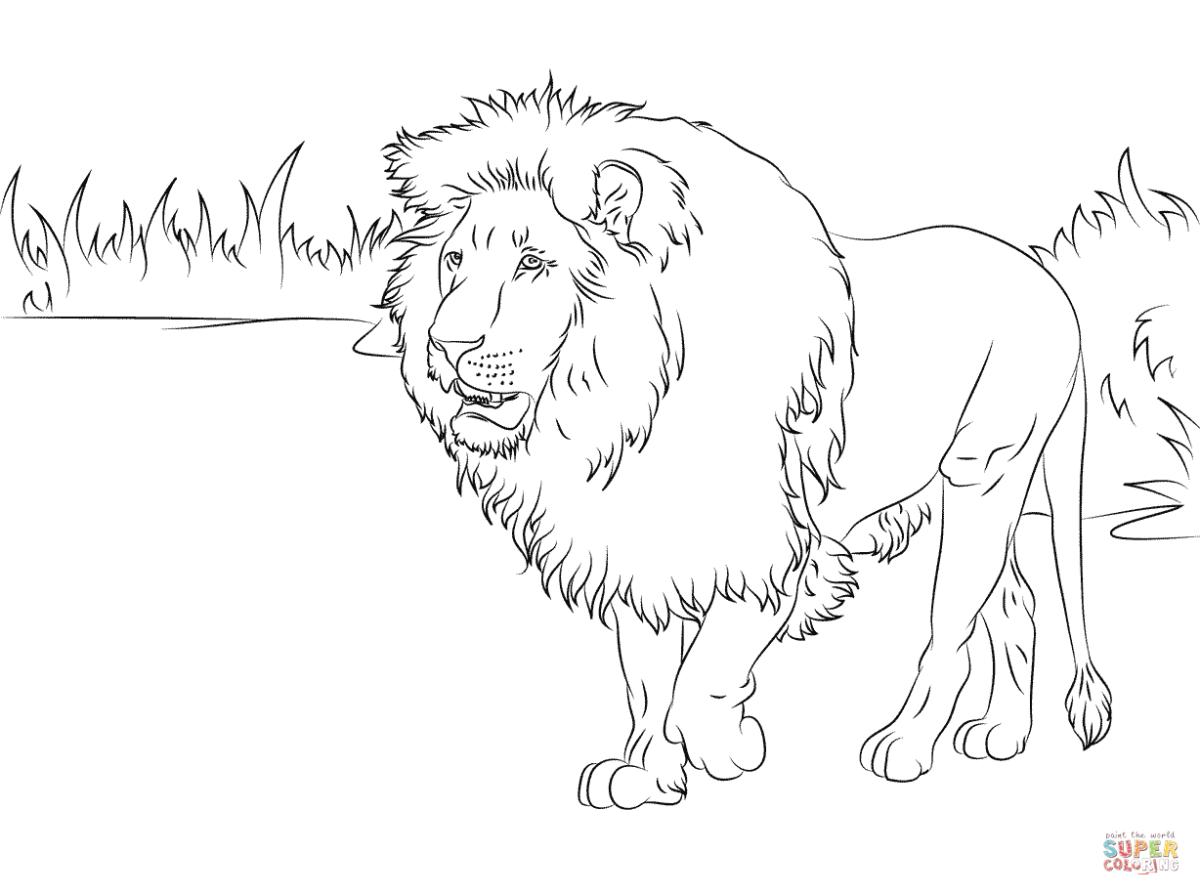 Lowe Malvorlage Zum Ausmalen Ausmalbilder Lion Coloring Pages