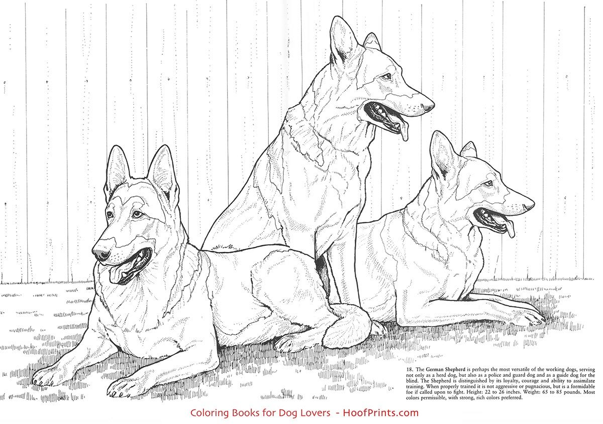 Favorite Dogs Coloring Book Www Hoofprints Com Dog Coloring Book Dog Coloring Page Puppy Coloring Pages
