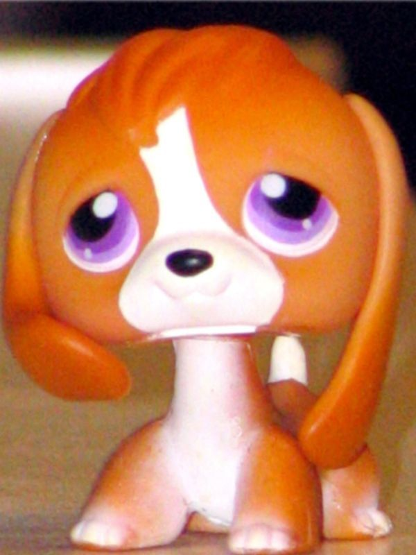 Littlest Pet Shop Orange Cream Beagle 301 Retired Lps Hub Puppy Dog Lot Lps Littlest Pet Shop Pet Shop Lps Pets