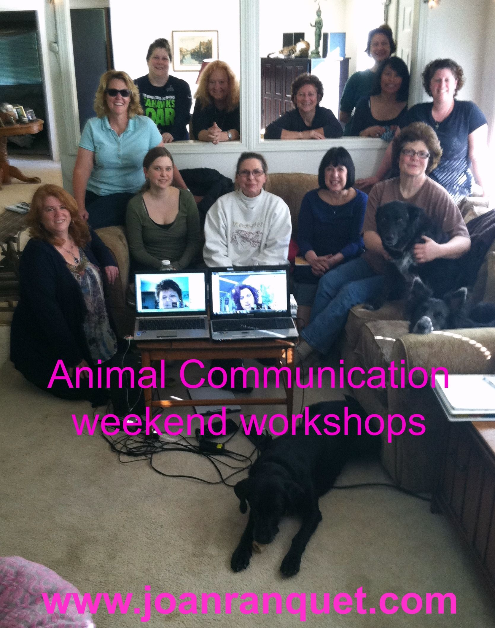 17+ Animal crossing communicator parts ideas