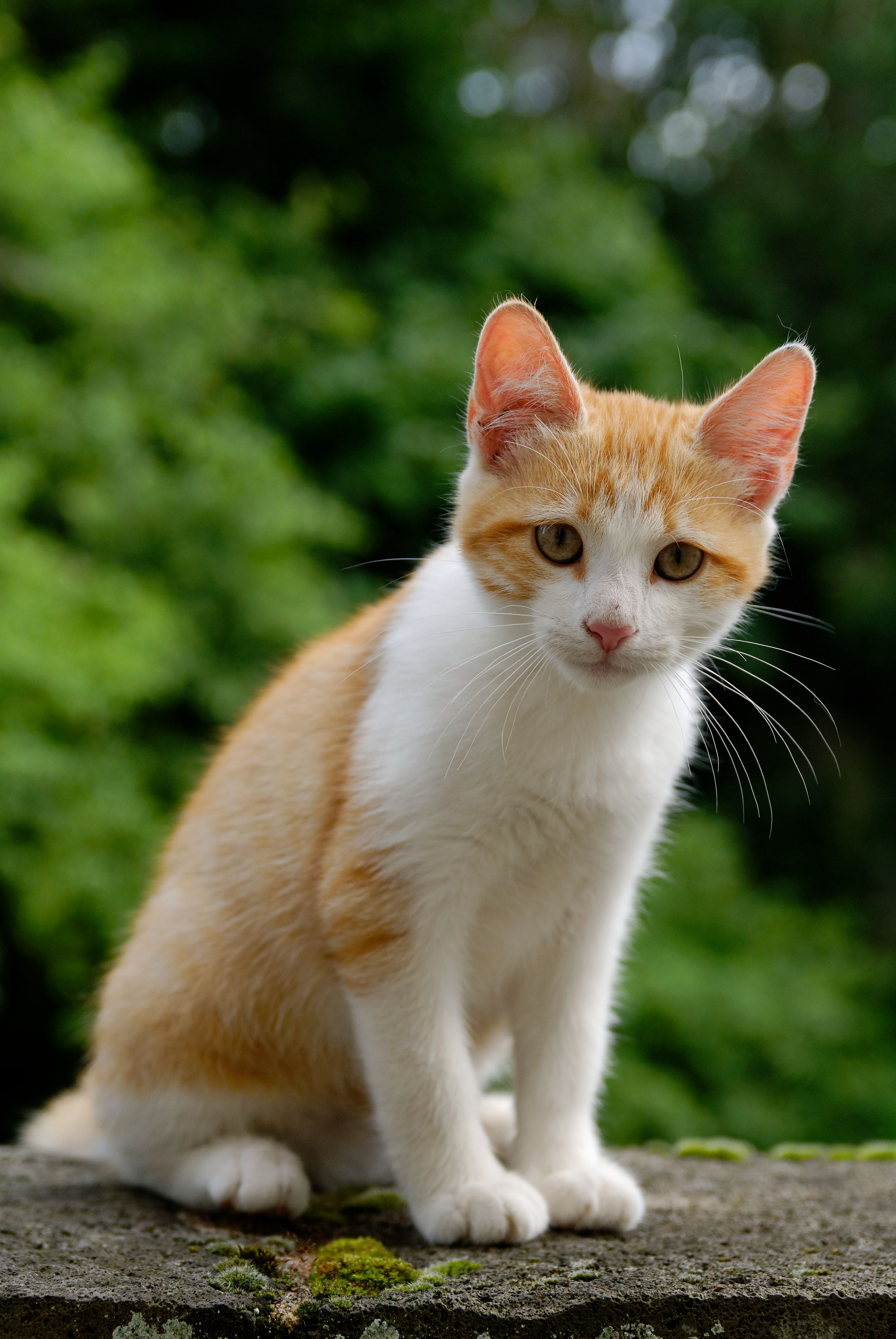 Great Tips About Cats That Anyone Can Use Read More Details By Clicking On The Image Catstraining Cats Cute Cats And Kittens Cute Cats