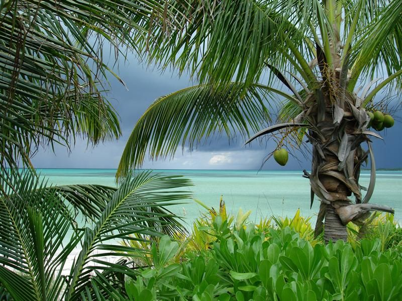 beautiful spanish wells, bahamas | My Favorite Places