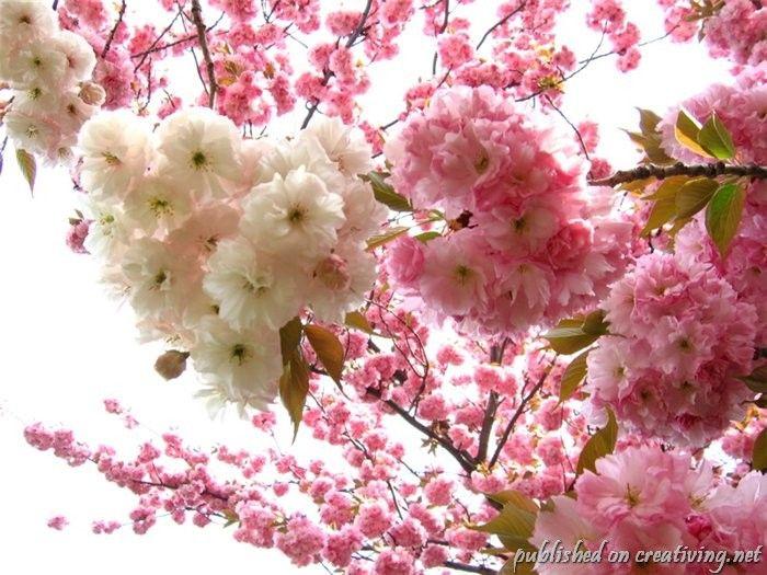 красивое фото с цветами