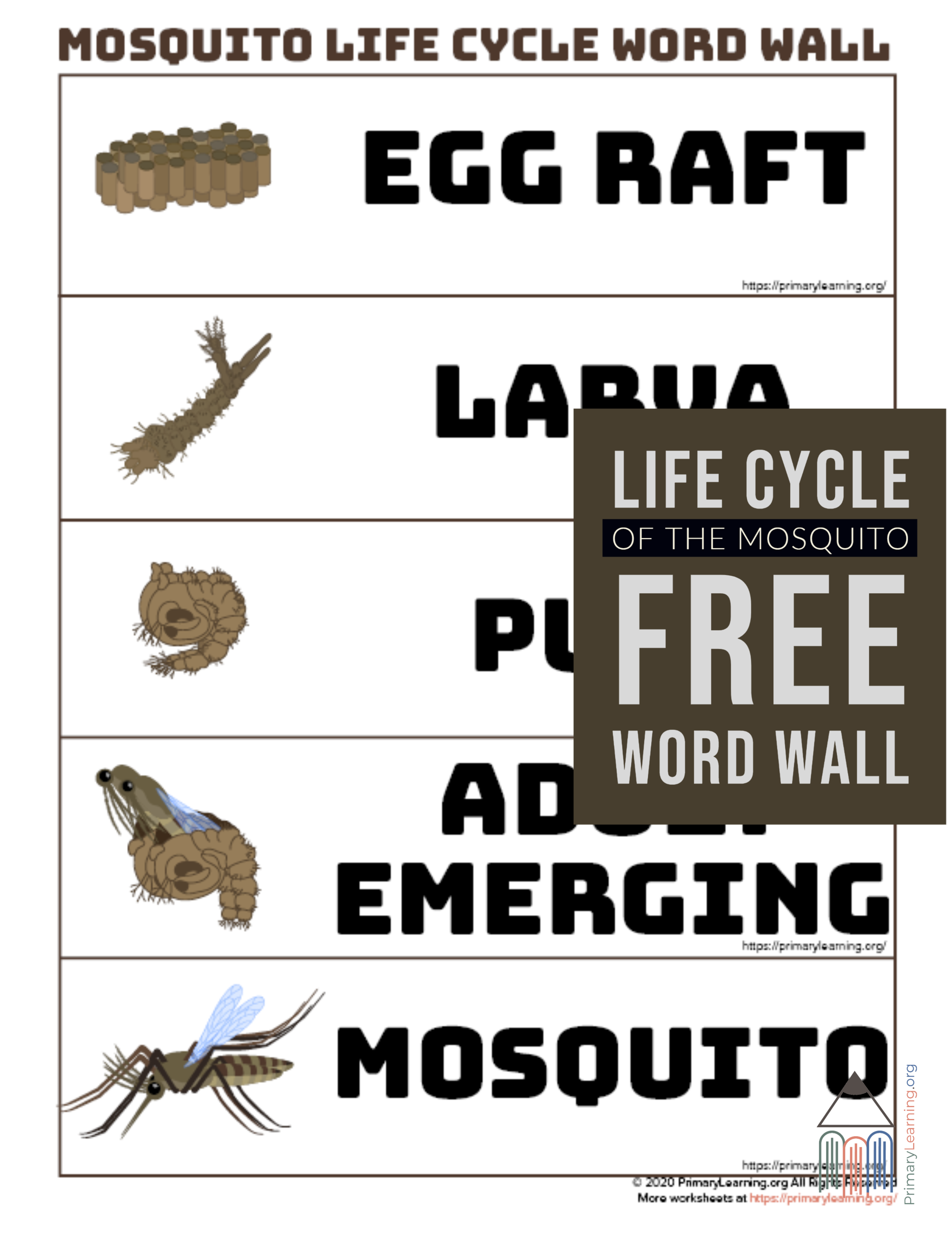 Mosquito Life Cycle Word Wall