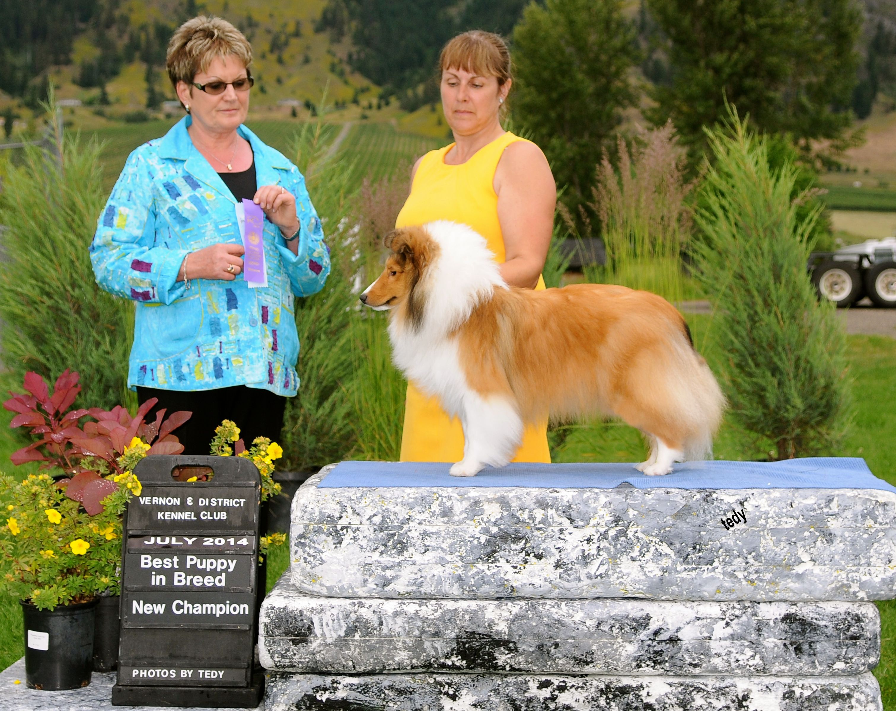 Ch Mbpig Canyonview Lord O The Westwind Rn Sheepdog Breeds