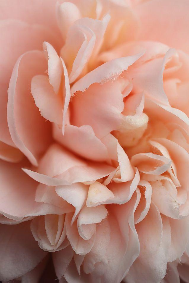 Ванна цвета персика