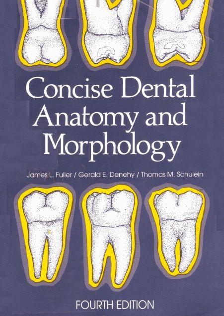 Dental Anatomy Quickstudy Academic