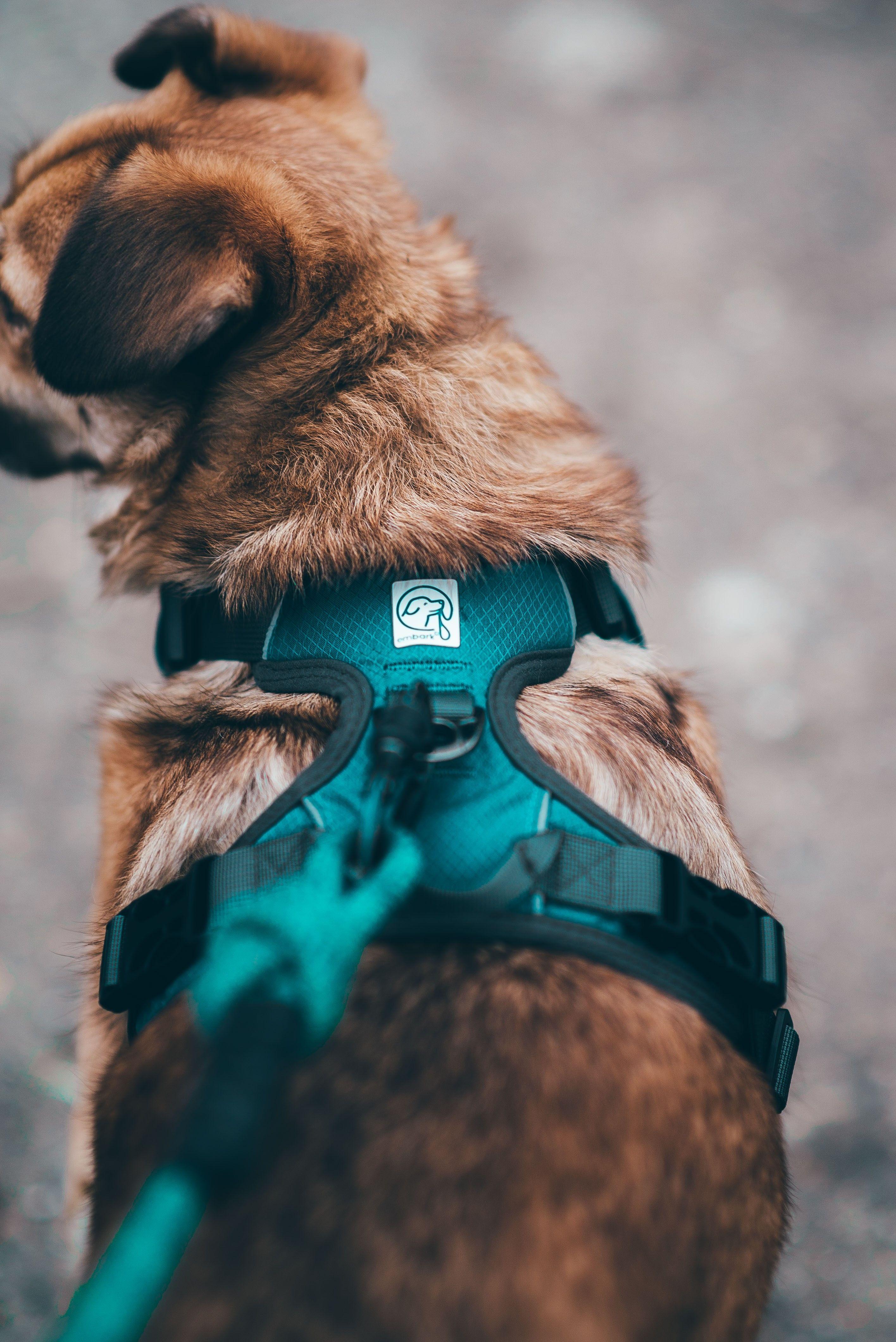 Adventure Dog Harness Dog Adventure Dog Harness Cute Dog Harness