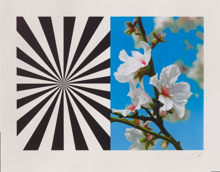Exstacy Almond Blossom