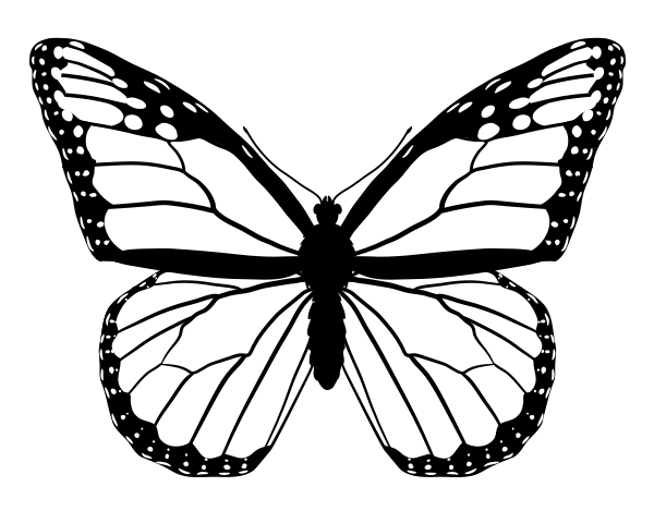 Line Art Butterfly : Butterfly line drawings google search