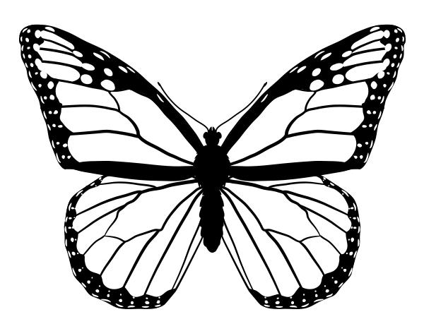 Drawingbutterfly 4 5 Monarch Png 600 469 Pixels Butterfly Line Drawing Butterfly Drawing Butterfly Outline