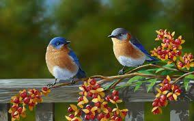 BIRDS | Shopswell
