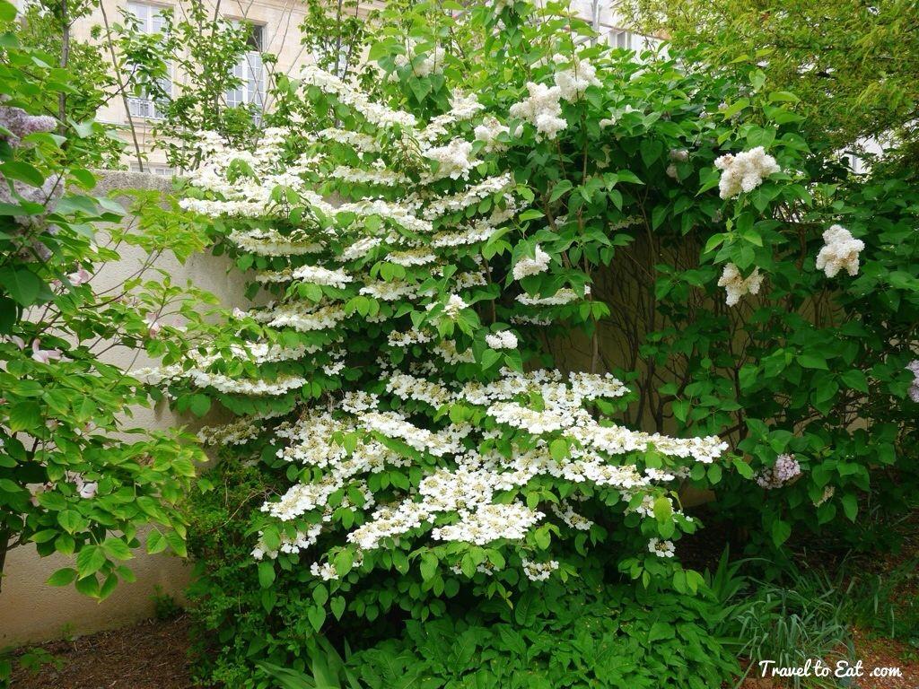 Jardin Anne Frank The Marais Paris Buiten