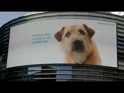 Looking For You Battersea Dogs Battersea Dogs Home Dog Charities