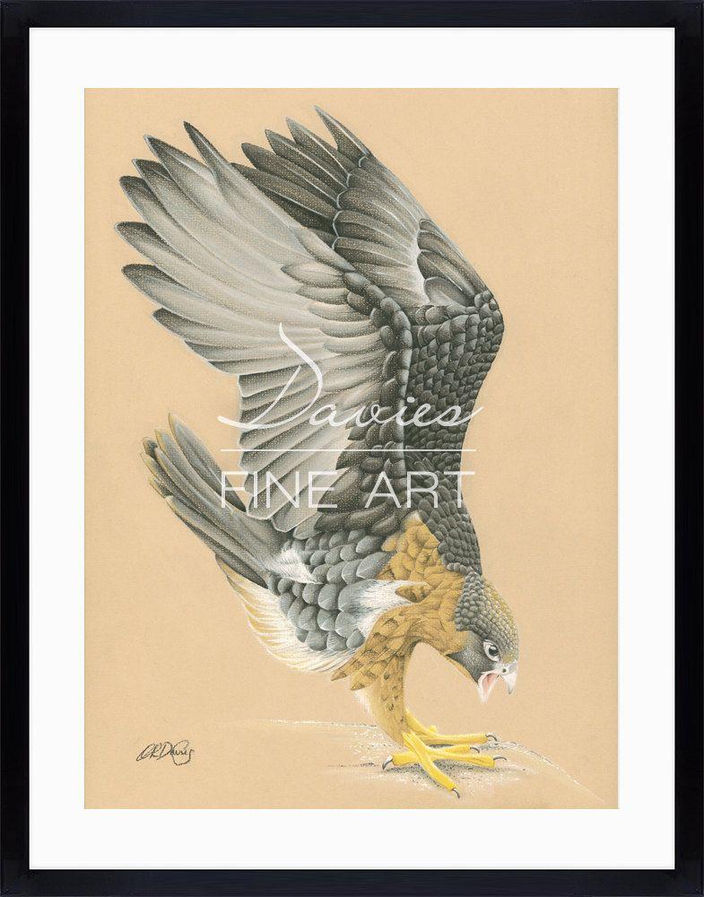 Peregrine Falcon - Peregrine Falcon Pastel Drawing, Peregrine Falcon ...