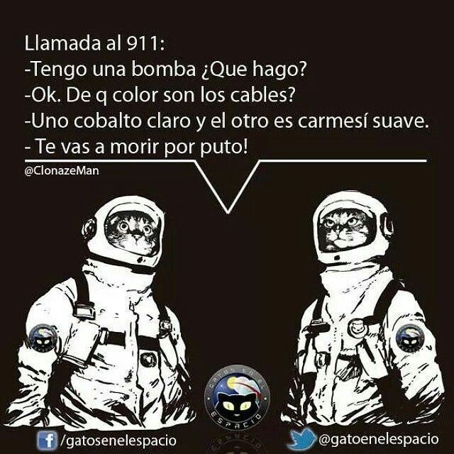 Gatos en el espacio