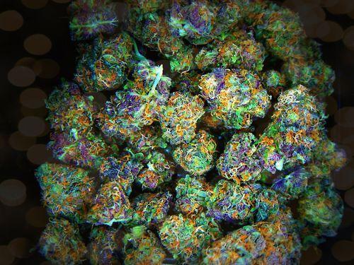 how to get marijuana seeds in the us