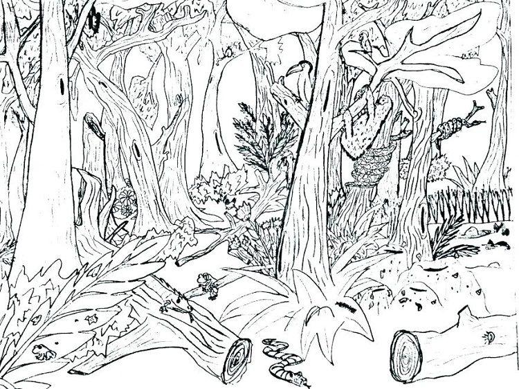 Realistic Jungle Coloring Pages Malvorlagen Tiere Malvorlage Einhorn Ausmalbilder