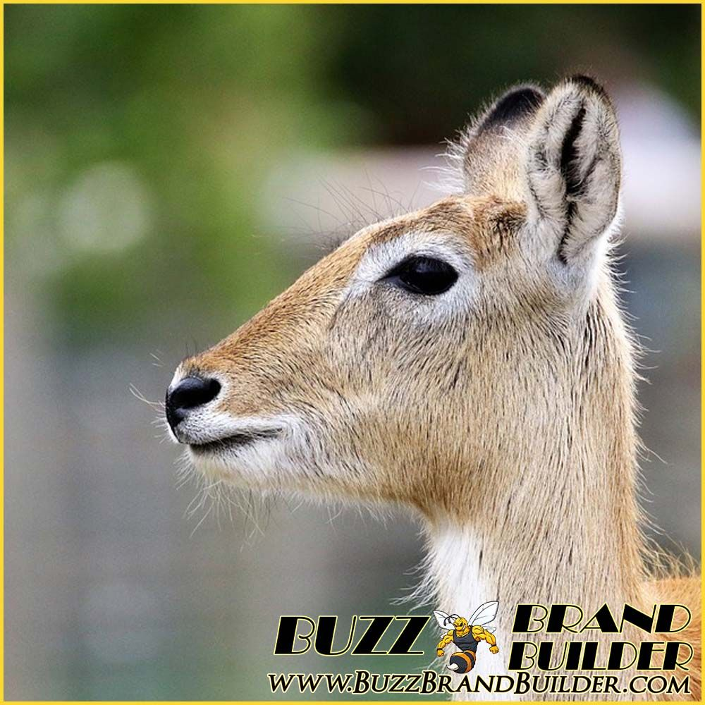 Sample Post in the Animal - Wild Africa Category. We have over 60  differrent Categories to choose from. https://buzzbrandbuilder.c… | Animals,  Animals wild, Africa