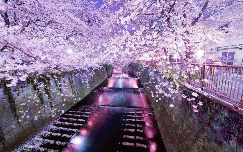 20 Best Places To Enjoy Sakura Cherry Blossoms In Japan Tsunagu Japan Nature Beautiful Nature Beautiful Wallpapers