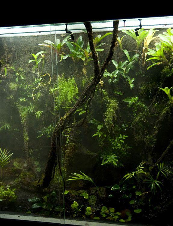 Realistic Fake Aquarium Plants - 1000+ Aquarium Ideas