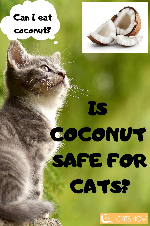 Can Cats Eat Coconut Cat Food Best Cat Food Wellness Cat Food