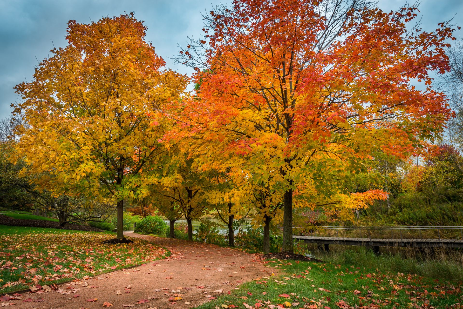 photography park tree fall foliage wallpaper | paisajes | pinterest
