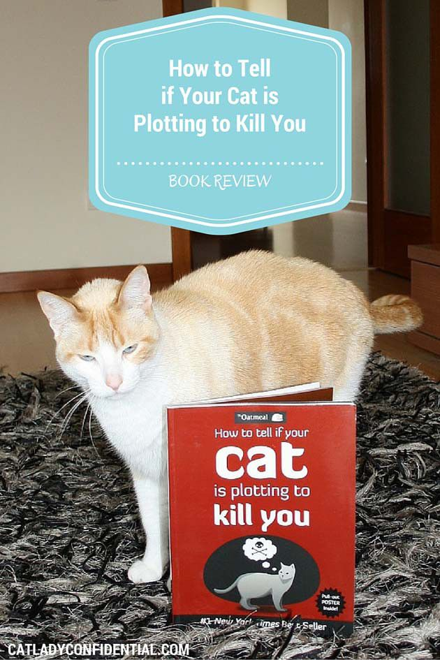 Stop Meowing And Go The F Ck To Sleep Cats Cat Parenting Cat