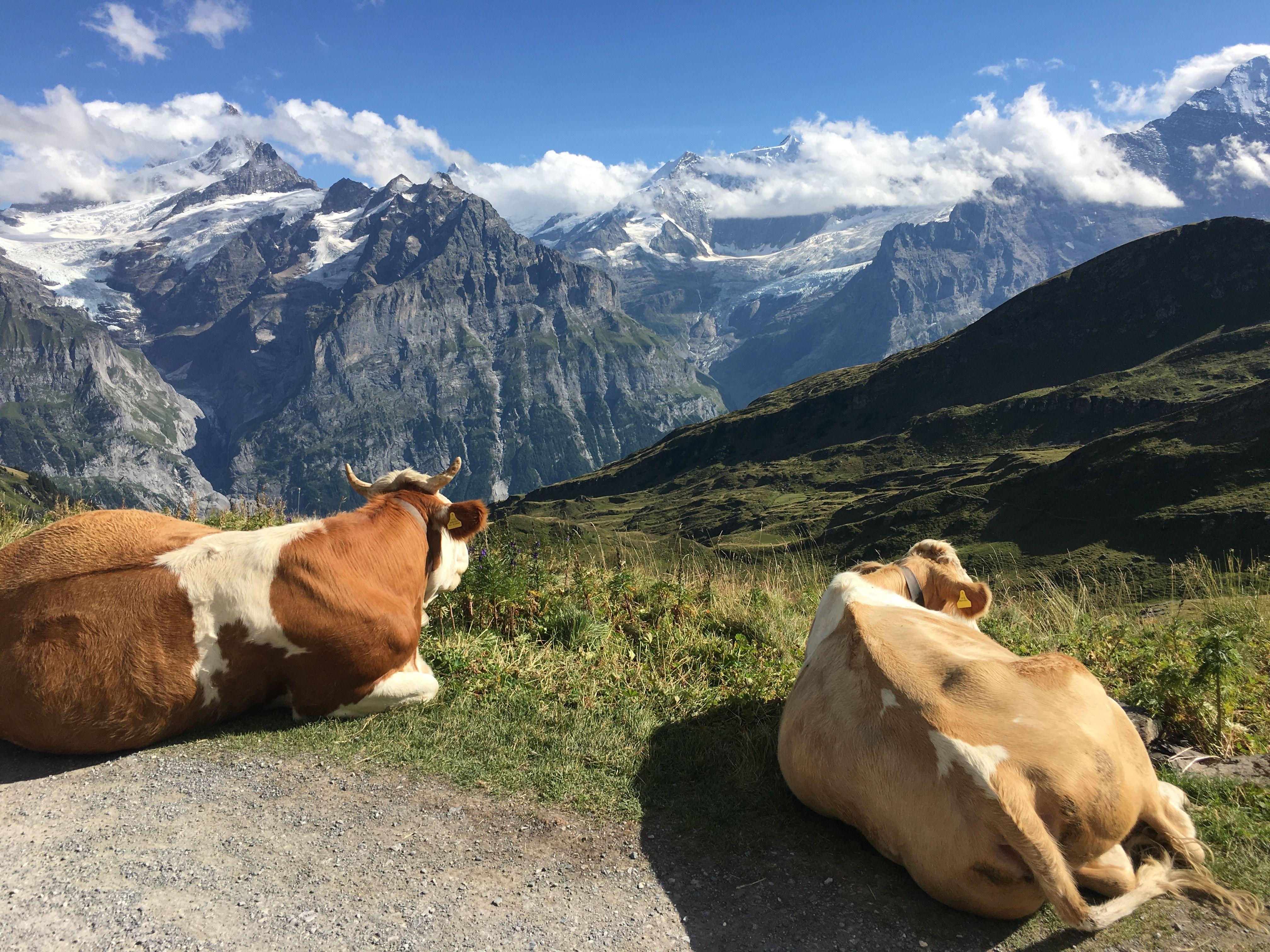 Grindelwald near Interlaken, Switzerland Outdoor