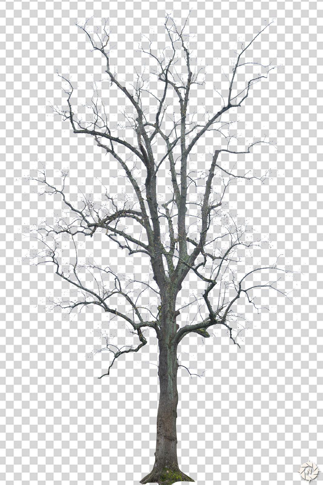 Dead Tree 02 Png Tree Photoshop Dry Tree Tree Textures