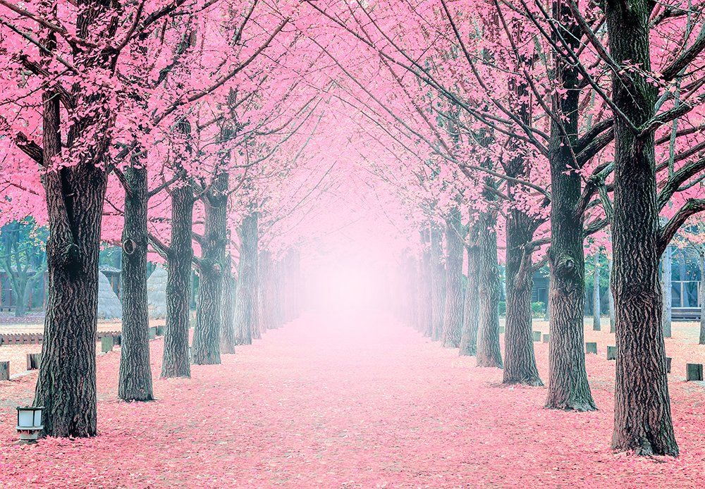 Large Wall Mural Lane Of Pink Fallen Leaves With Trees By Each Side Vinyl Wallpaper Removable Wall Decor Latar Belakang Fotografi Alam Bunga Sakura