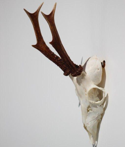 Reebok Gewei Decoratie Nr 5 Reebok Balletschoenen Geweien