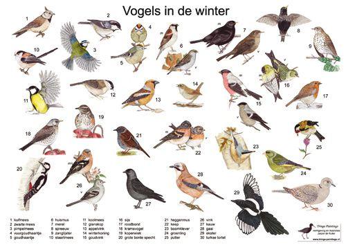 Verrassend soorten vogels spanje - Google zoeken (met afbeeldingen) | Vogels ME-06