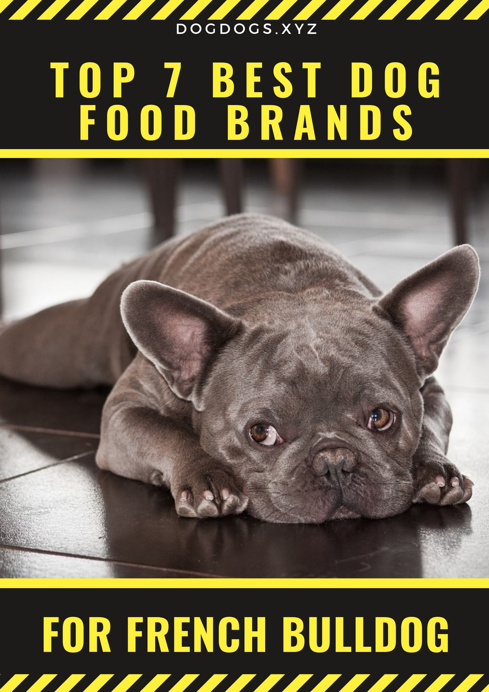 Top 7 Best Dog Food Brands Cars