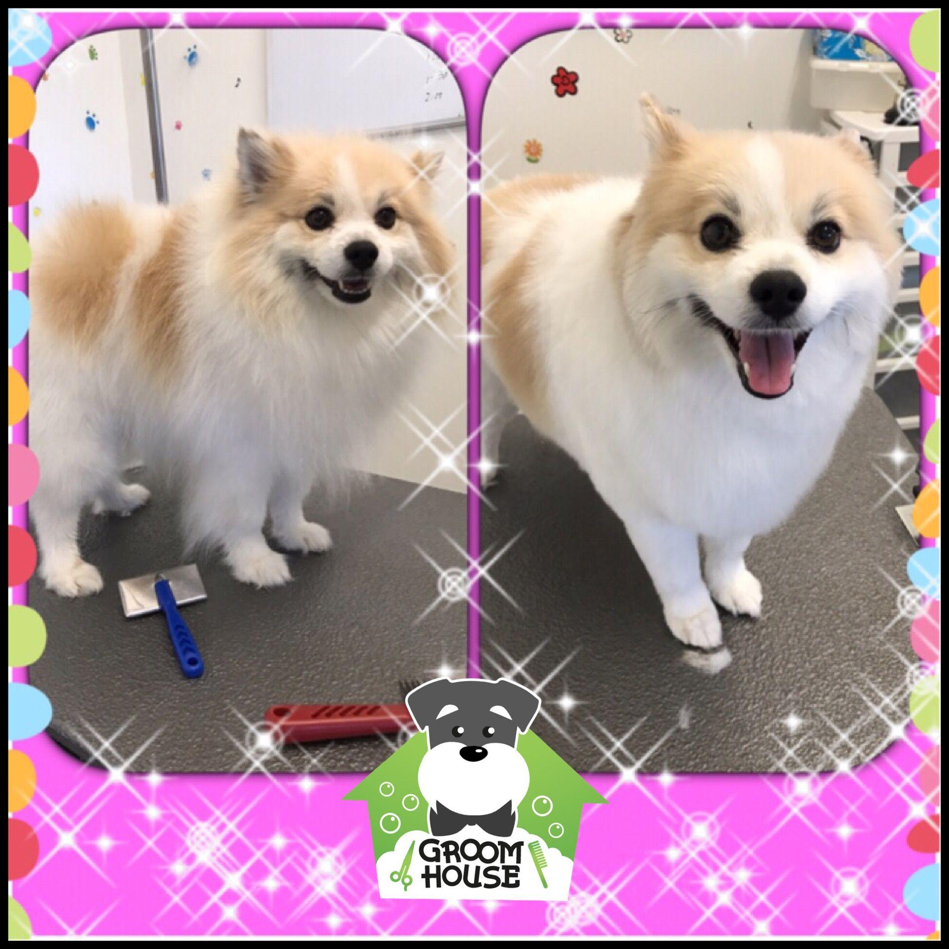 Pin En Groom House Daycare Pet Salon
