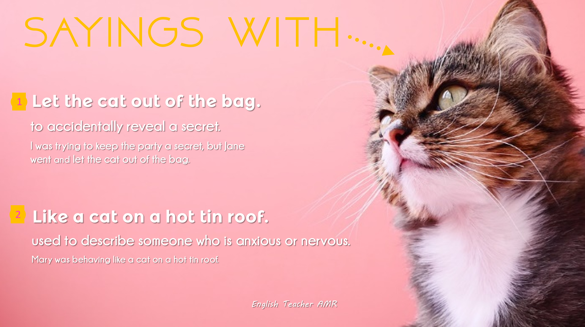 Idioms With Cats English Teacher Amr Anglijskij Englisch Anglais Inglese English Teacher Teacher English