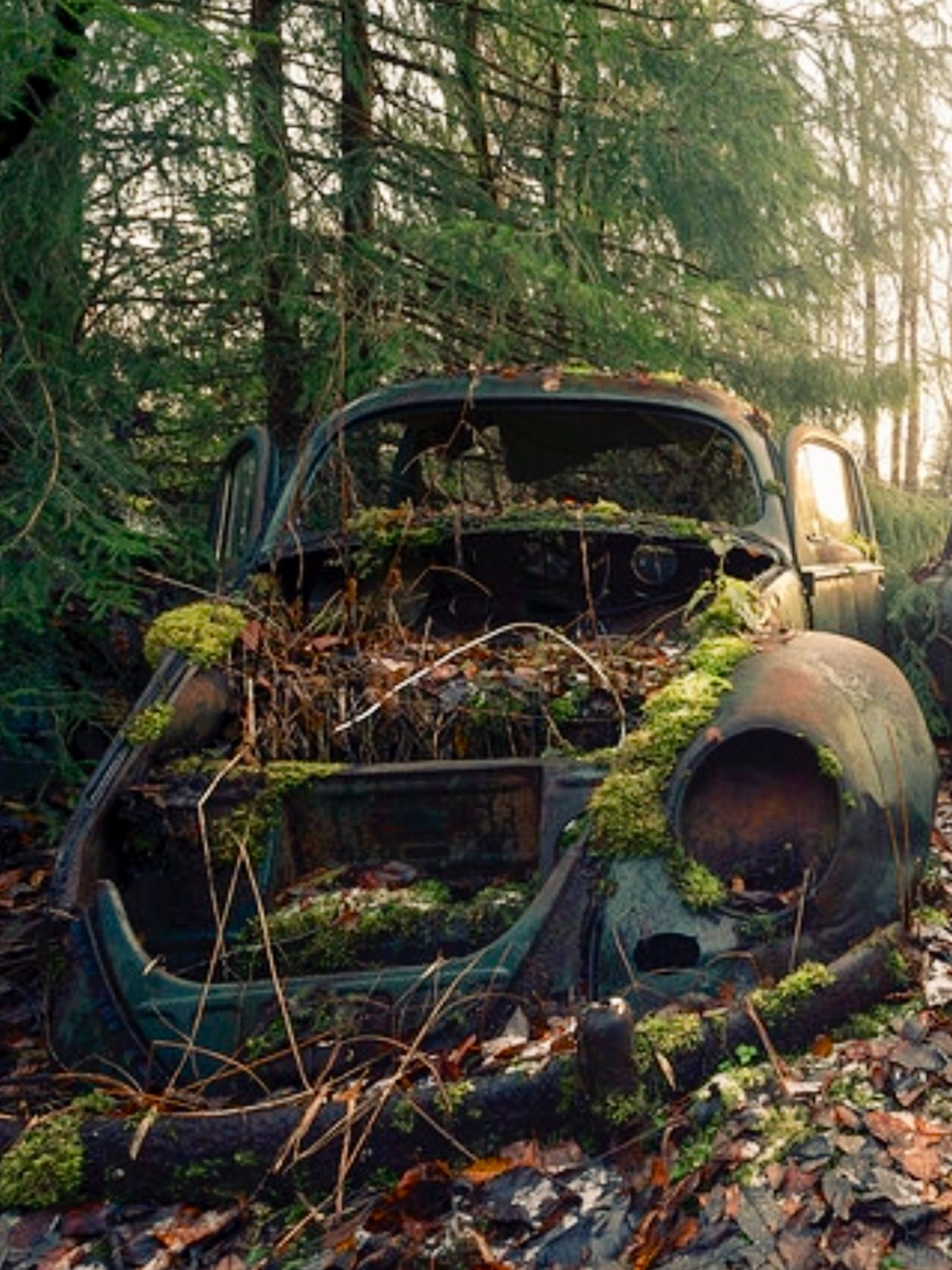 Rusty Car In The Woods Source Facebook Com Rust In Peace Cars