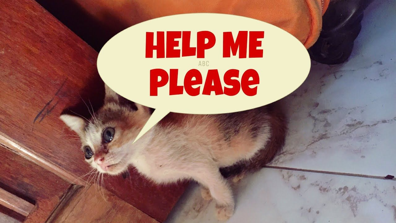 A Story Of A Little Stray Kitten Who Cries With Real Tears Stray Kitte Senior Cat Care Cats Cute Cats And Kittens