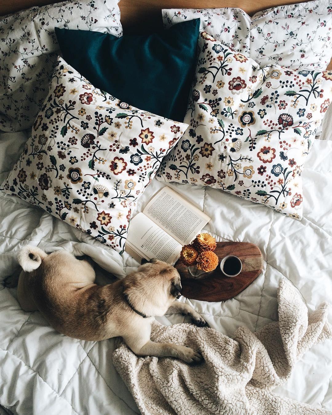 Babe Cave, Pug Life, Cozy