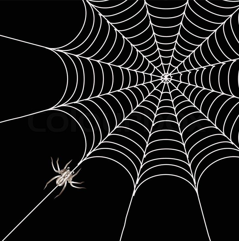 vector of black spider and spider web isolated on the