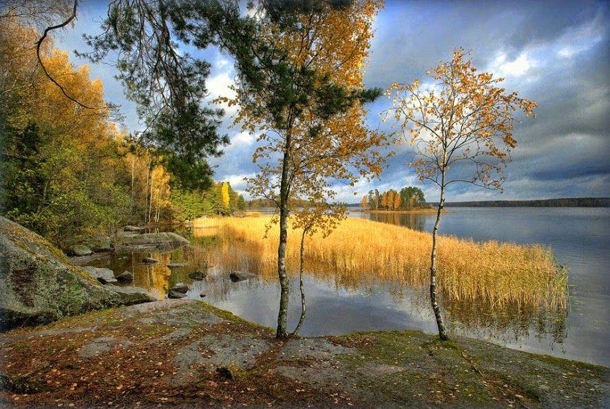 Tamara Patoka Y en las piedras crecen árboles ...  Autor Evgeny Sokolniki