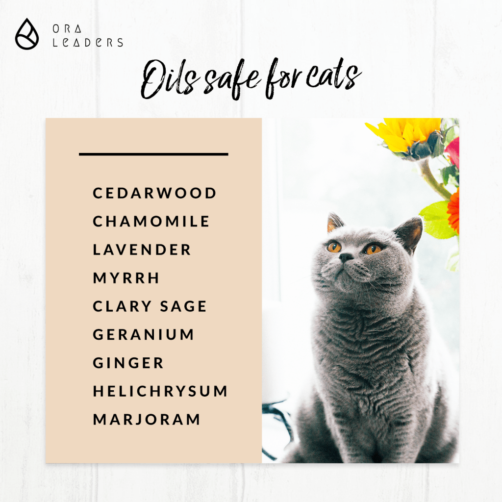 Doterra Oils Safe For Cats Are Essential Oils Safe Oil Safe Calming Essential Oils