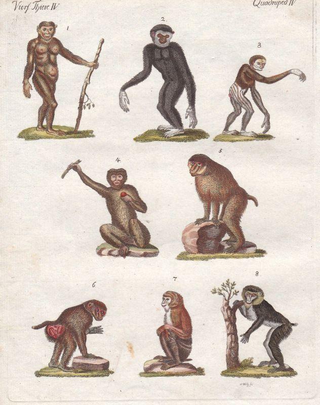 Kunstdrucke Affen monkeys Primaten primates Orangutan Orang